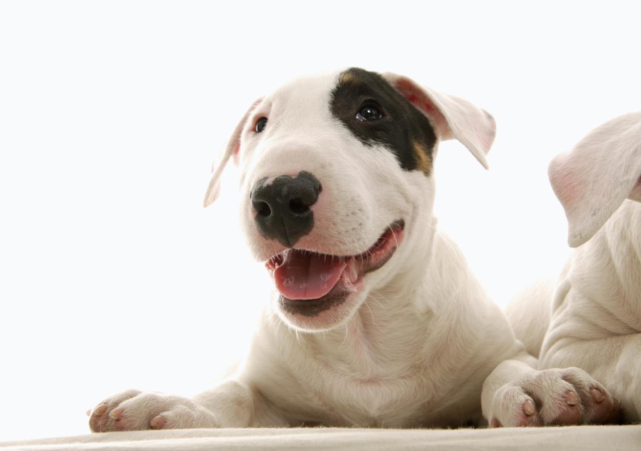 coleccion de fotos de perros (MUY BUENAS)