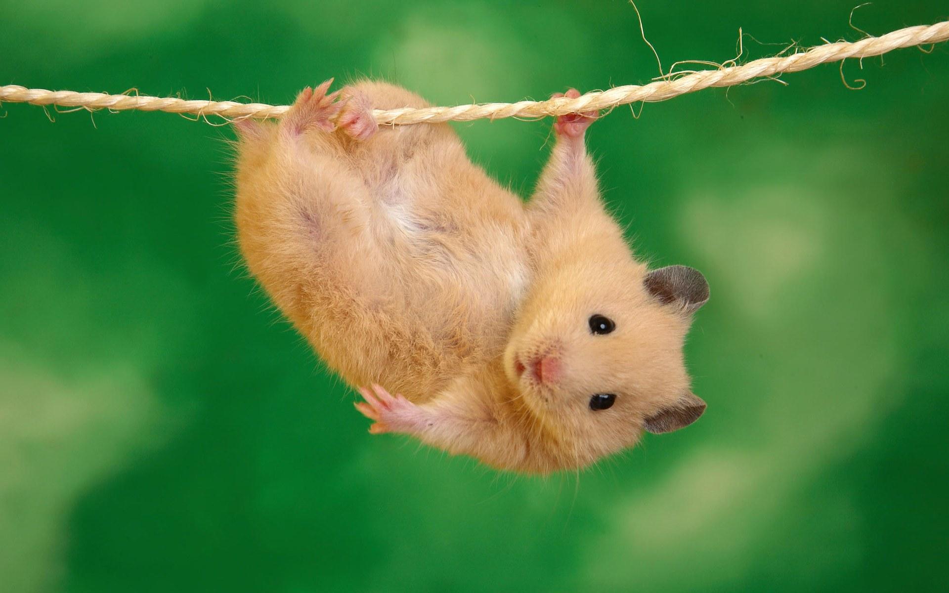 Fondos De Pantalla De Animales Graciosos: 40 Fondos De Pantalla Divertidos De Animales.