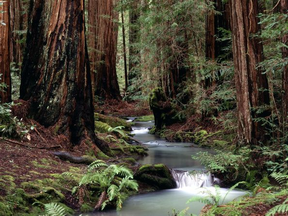 Montgomery Woods State Reserve, California - 160