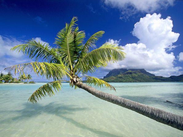 Paraisos_tropicales_ 50