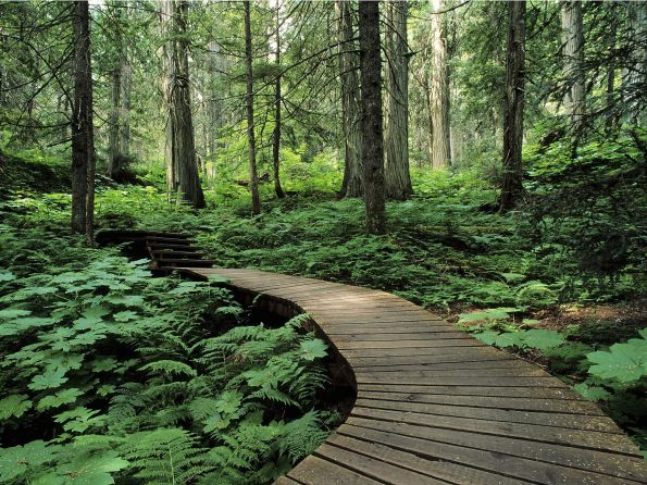 Forest Trail, Mount Revelstoke, British Columbia